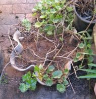 Asbestos Audits Queensland AAQ PL - Asbestos can be Found in Flower Pots