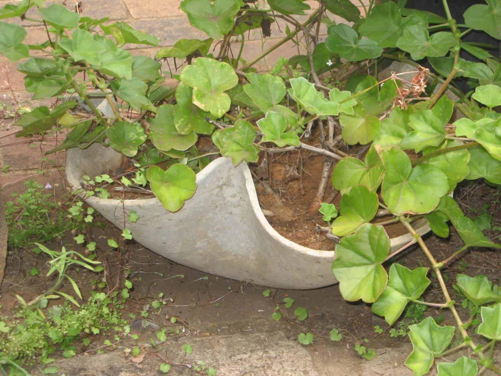 Asbestos Audits Queensland AAQ PL - Asbestos in Flower Pots